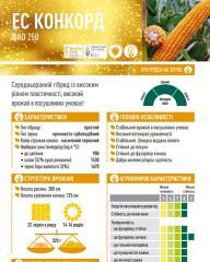 Семена кукурузы ЕС КОНКОРД