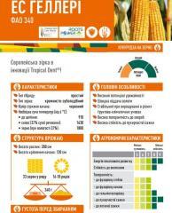 Семена кукурузы ЕС ГЕЛЛЕРІ