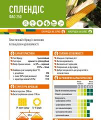 Семена кукурузы СПЛЕНДІС