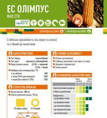 Семена кукурузы ЕС ОЛІМПУС