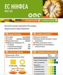 Семена кукурузы ЕС НІНФЕА