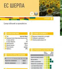 Семена подсолнечника ЕС ШЕРПА