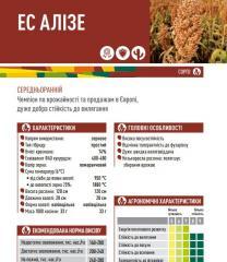 Семена сорго ЕС АЛІЗЕ