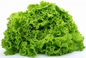 Cos lettuces