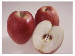Саженцы яблони Реколор®