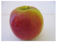 Саженцы яблони Ренора ®