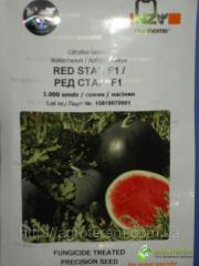 Семена арбуза Ред Стар 1000с