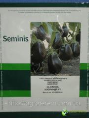Семена баклажана Клоринда 1000с