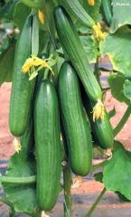Овощи свежие купить (продажа), цена, Ровно,