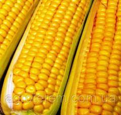 Семена кукурузы Спирит 1 кг