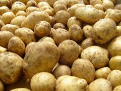 Картофель ранний, продажа, Запорожье, Украина