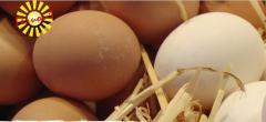 Ägg och äggprodukter