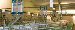 Equipment for pig-breeding