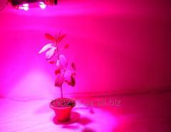 Фитолампа для растений Allat F-100 (Польша) 115Вт