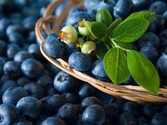 Berries wild-growing, Ukraine bilberry