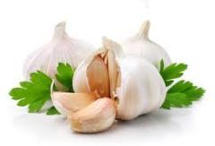 Garlic strelkuyushchayasya form