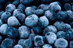 Frozen wild blueberry (Bilberry) Carpathian mountains