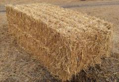 Солома пшенична тюкована врожай - 2017 року