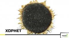 Семена подсолнечника ASPRIA Хорнет (посевной материал подсолнух)