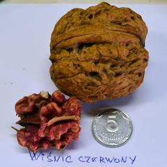 Греческий орех красный