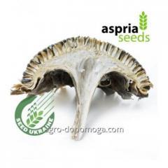Семена подсолнечника АС 33111 (под гранстар) Aspria Seeds посевной материал