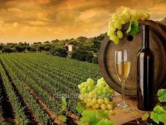 Вино на розлив