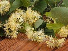 Linden, flowers (Tilia officinalis, flos)