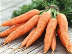 Морковь столовая Украина