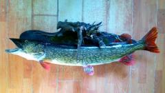 Опудала риб