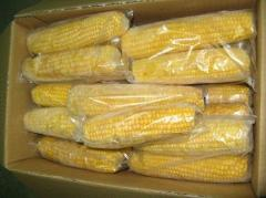 The corn frozen in ears of 3 kg