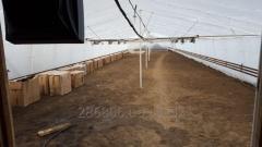 Greenhouse facility in the Zaporizhia region