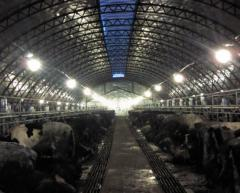 The room for cows