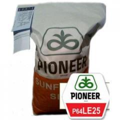 Подсолнечник PIONEER П64ЛЕ25 (Гранстар)