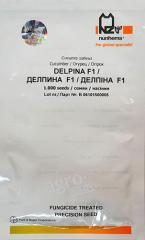 Семена огурца Дельпина F1 1000 семян Nunhems