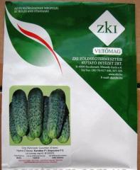 Семена огурца Каролина F1 100 семян ZKI seed