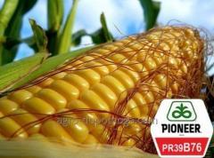 Кукуруза Пионер ПР39Б76 (Pioneer PR39B76)