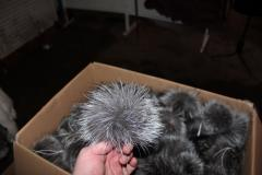 Fur pompon from the silver fox of 15 cm