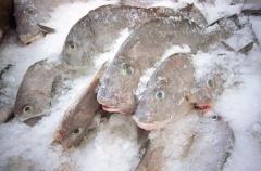 Рыба мороженая опт, Украина