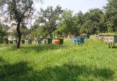 4-х рамочный пчелопакет Закарпатье, Украина