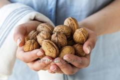 FRESH WALNUTS with shell and kernels...