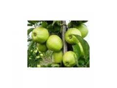 Саженцы яблонь Грен Стар