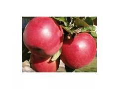 Саженцы яблонь Женева