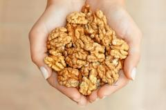 Walnut Kernels Organic Fresh Wholesale