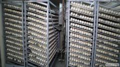 Poultry hatchery equipment