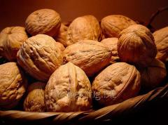 Delicious walnuts with shell and unshelled...