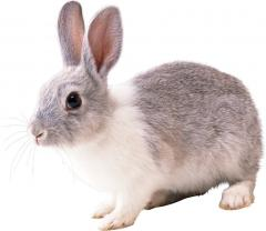 Forage for Krolematki's (granule) rabbits of 100%