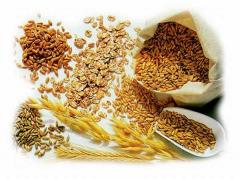 Grain, vegetable oils, sugar, flour for expor