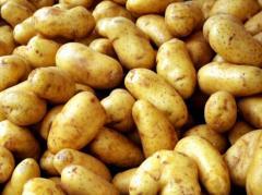 Картофель ранний, продажа, Украина