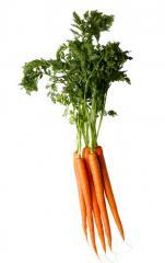 Морковка ранняя,купить ранняя морковь, морковь