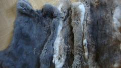 Skins of a rabbit fur,  high-quality.